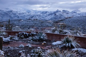 Tucson Snow in Back Yard